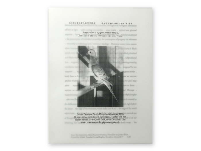 """""""The Supposium"""" Broadside, black and white image of a pigeon with blurred text in the background"""